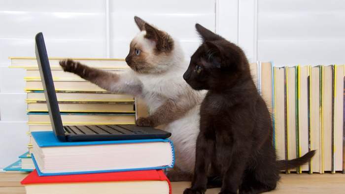 two cats register for online banking
